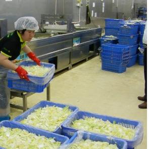 食品厂清洗包菜
