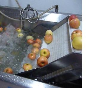 亿水牌连续式洗菜机