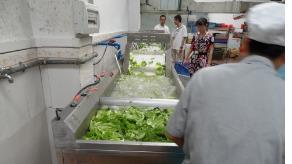 食堂大型洗菜机