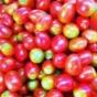 水果清洗机
