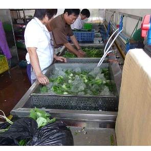 财富渔港酒楼用洗菜机
