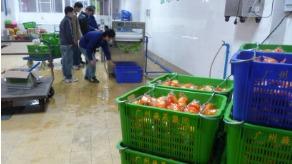 广州果蔬集团用洗菜机