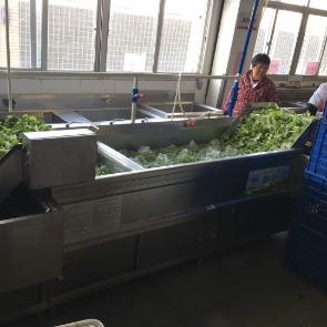 广州生产的洗菜机