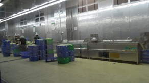 蔬菜加工中心,自动清洗流水线