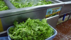南方医院食堂用洗菜机,清洗生菜
