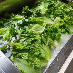 蔬菜经水触媒食品净化机净化